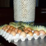 আশ্চর্য এক সর্প মন্দির 'স্নেক টেম্পল' কাহিনী