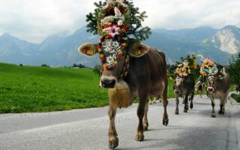 cow-beauty_1699660c